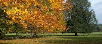 calke autumn