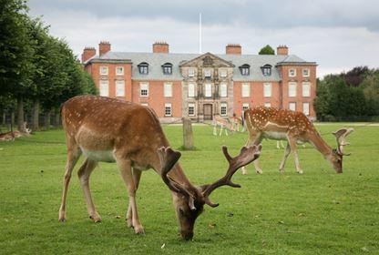 Dunham Massey Hall Deer Spice Walking Group