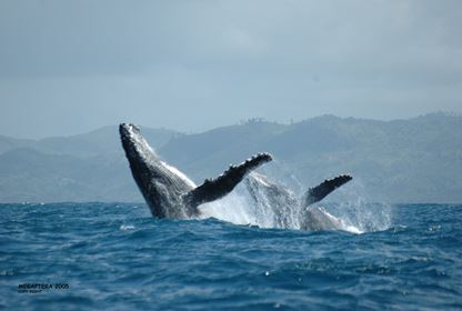 Sainte Marie  Humpback Whale Watching (June to Sept)
