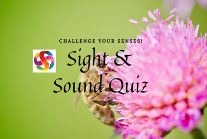 Sight and sound quiz pic