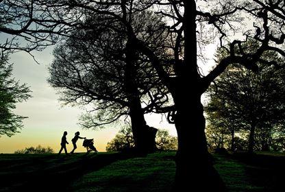 richmond park london sunset garden nature