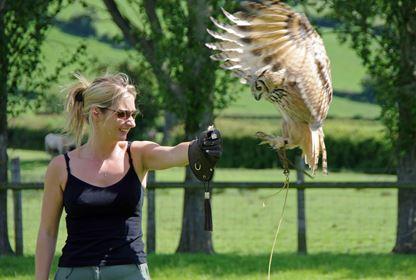 Animals Birds of Prey (2)