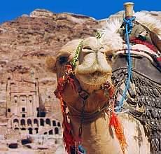 JO  Petra  tombs and camel