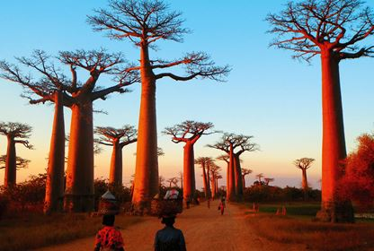 Morondava  Baobab Alley