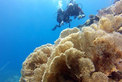 Sainte Marie  Diving
