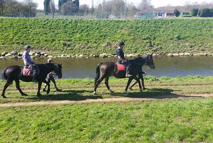 Animals Horse Riding (8)