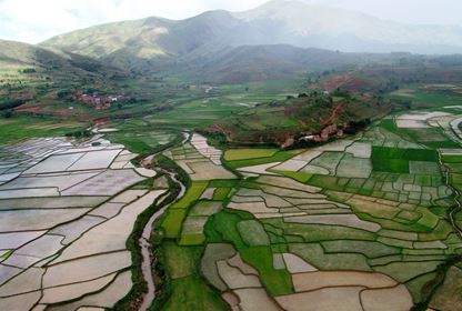 Fianarantsoa Region  Rice Fields